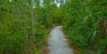 Pinelands Trail