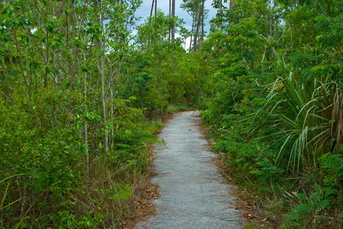 Pinelands Trail