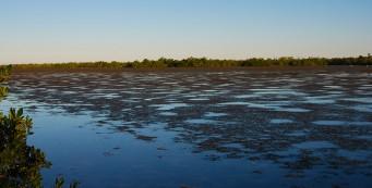 Red Mangrove Overlook