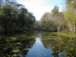 Reedy Creek Swamp