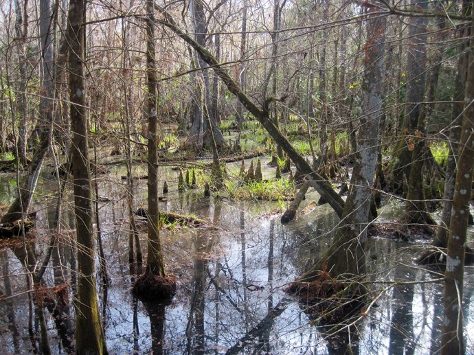 Swamp along the River Trails