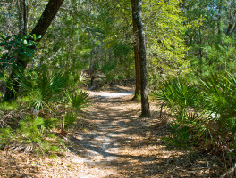 Rocky Bayou Hiking Trails