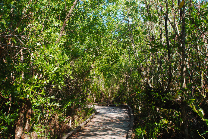 Royal Palm Hammock Trail