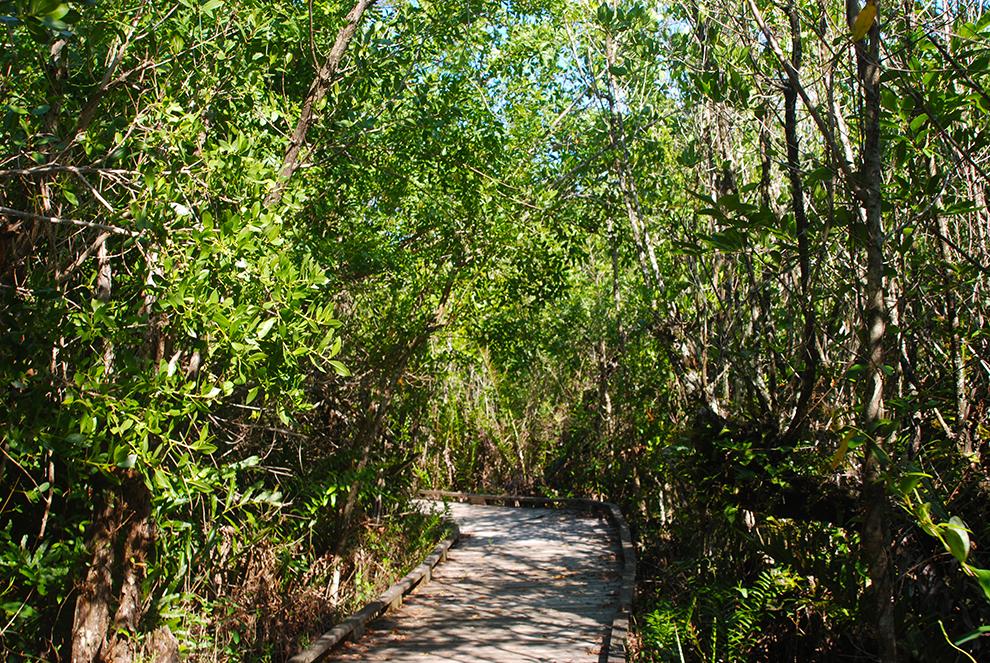 Royal Palm Hammock Trail