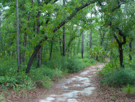 Silver Springs Sandhill Nature Trail