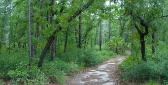 Sandhill Trail