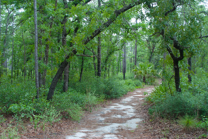 Silver Springs Sandhill Nature Trail Florida Hikes