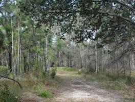 Rainbow Springs Sandhill Trail