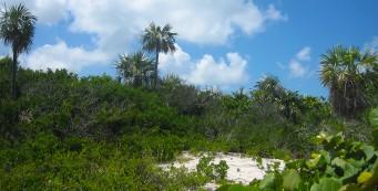 Silver Palm Trail