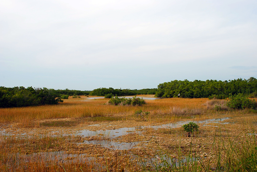 Ten Thousand Islands Marsh Trail