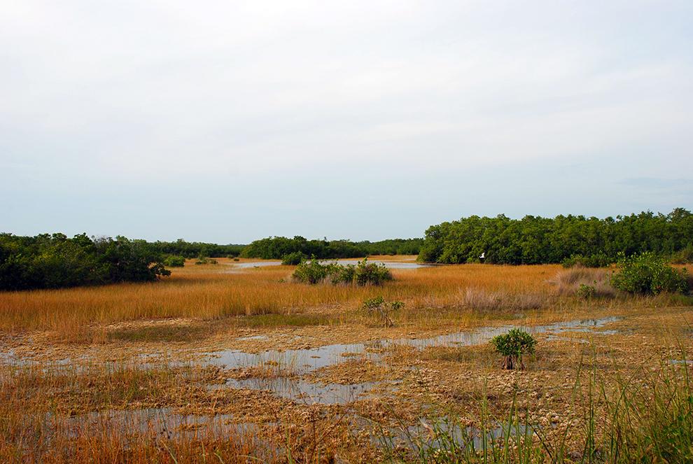 Ten Thousand Islands Marsh Trail