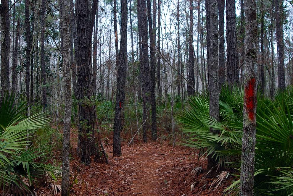 Tillie K Fowler Island Trail