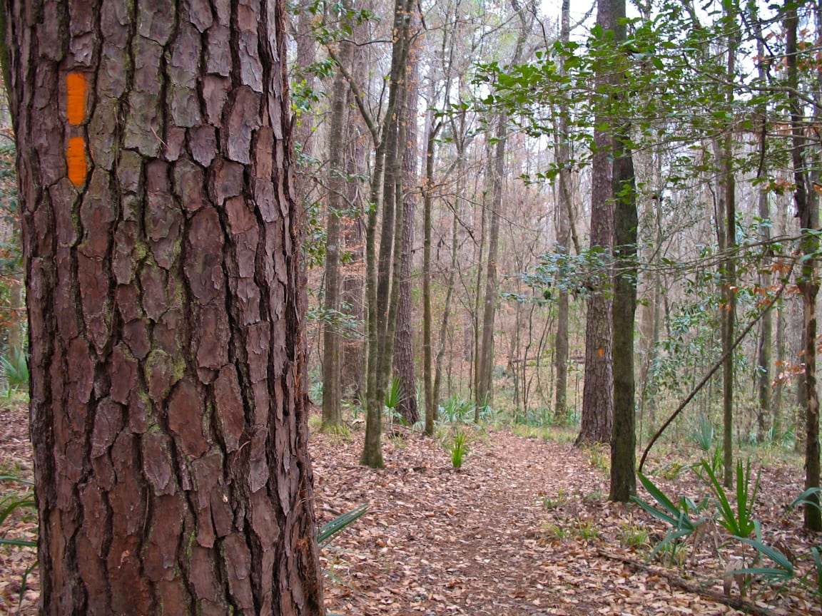 Torreya Hiking Trail
