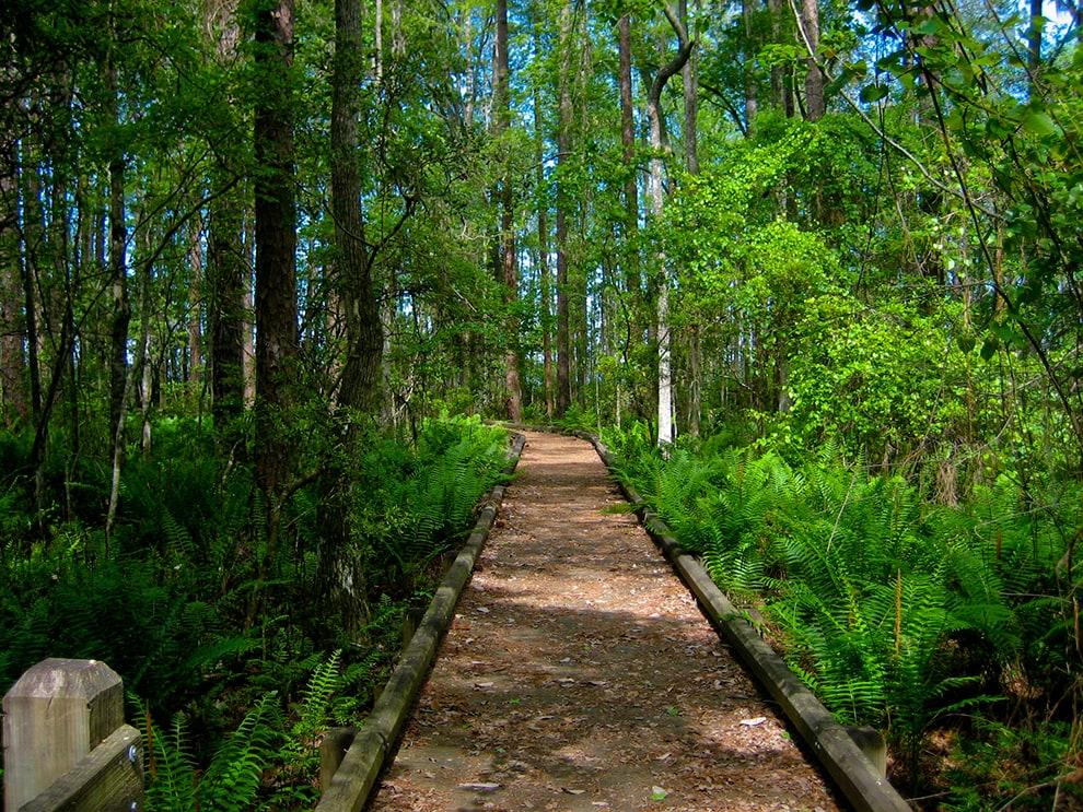 Trampled Track Trail