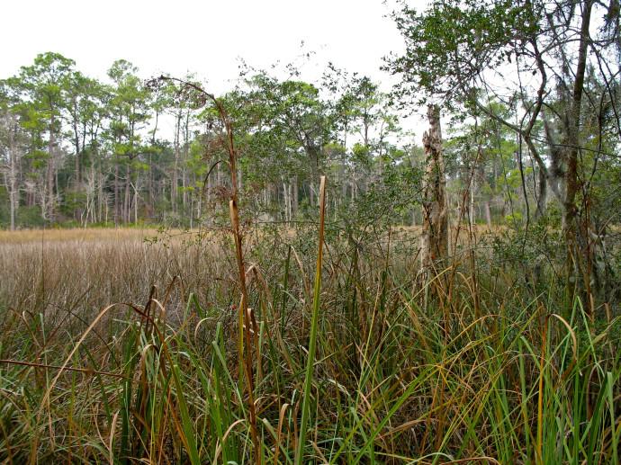 Tucker Bayou Trail