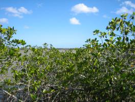 West Lake Mangrove Trail