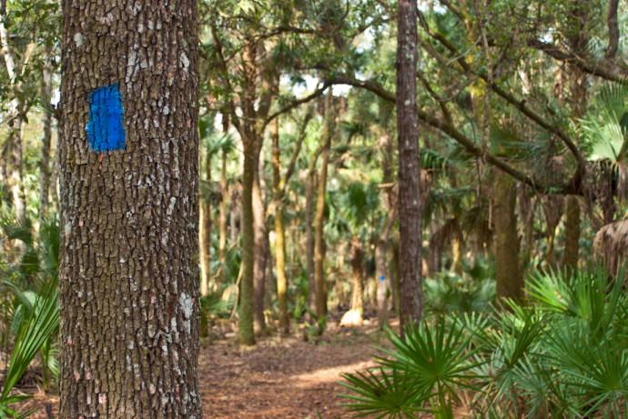 Wild Persimmon Trail