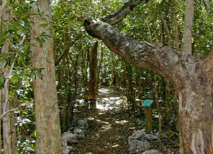 Wild Tamarind Trail