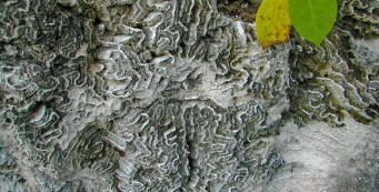 Windley Key Fossil Reef