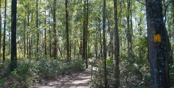 Rainbow Springs Sandhill Trail