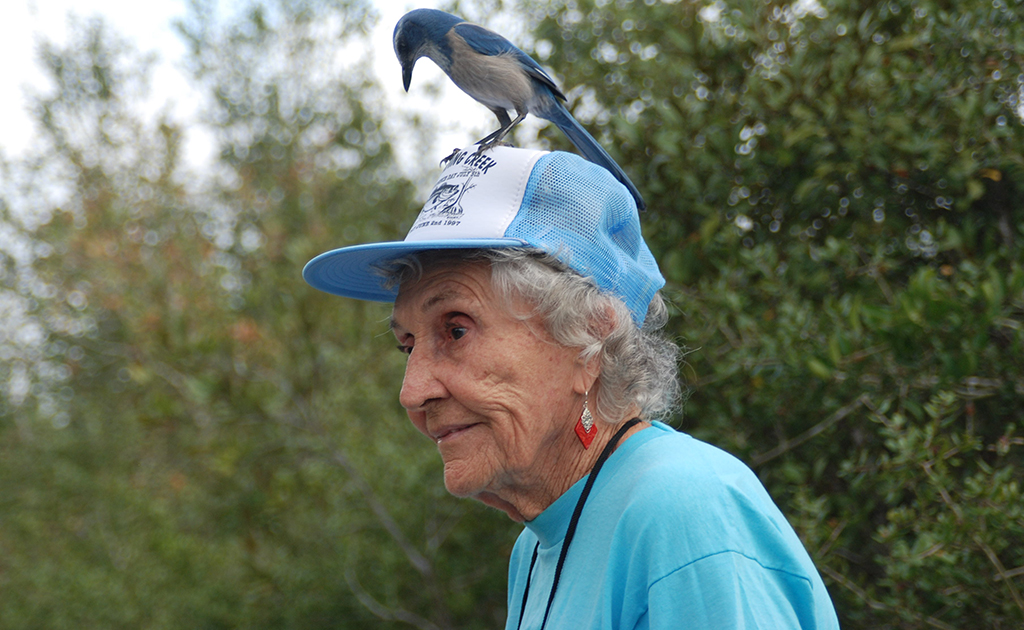 Ellen Peterson and the Scrub-Jay