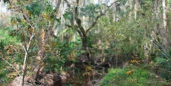 Bear Creek Nature Trail