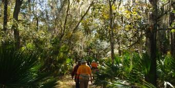 Bulow Hammock Trail