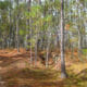 Cross Florida Greenway