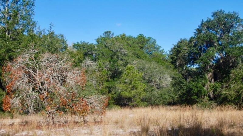 Sandhills at Sweetwater Preserve