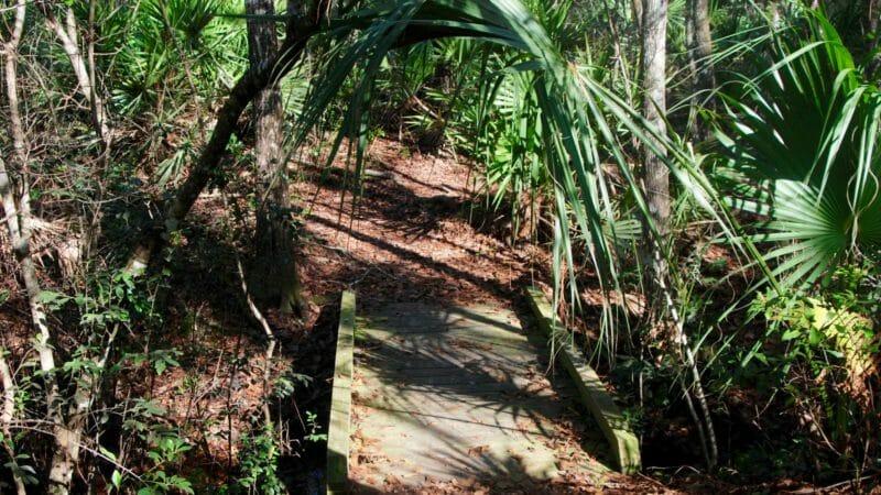 Sweetwater Preserve bridge