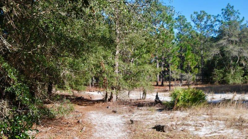 Sweetwater Preserve footpath