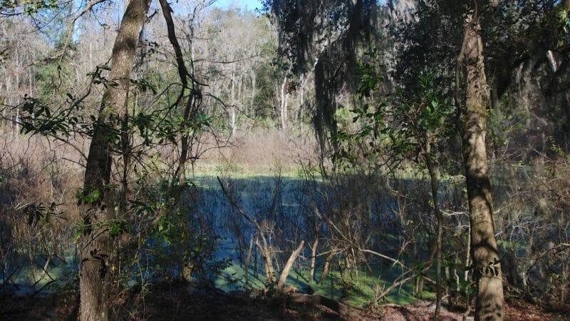 Sweetwater Preserve marsh in sinkhole