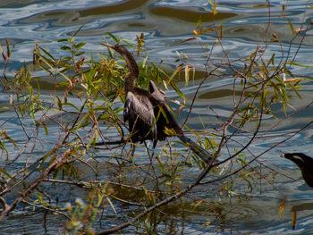 Bird Identification | Identify Florida Birds | Florida Hikes!