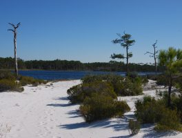 Topsail Hill Preserve Hiking Trails
