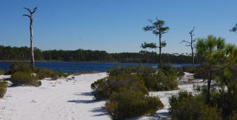 Topsail Hill Preserve State Park Florida Hikes
