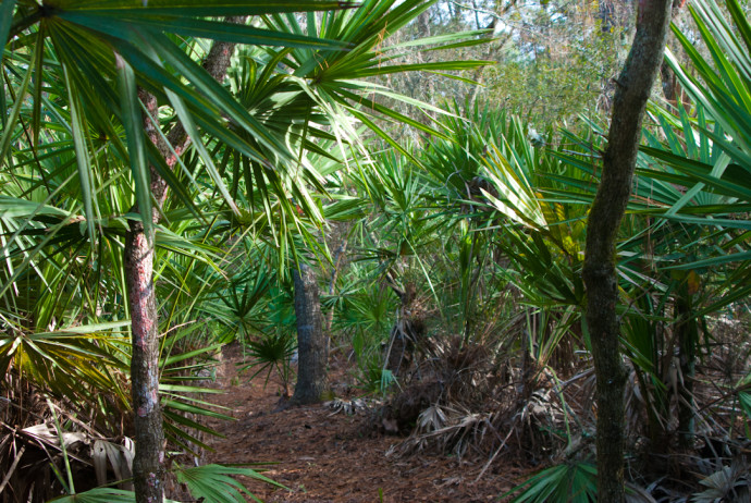 Florida Trail, Chuluota Wilderness to Joshua Creek