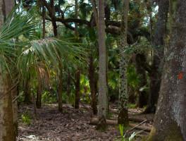 Florida Trail, Wheeler Road to Joshua Creek