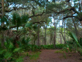 Pine Island Trail
