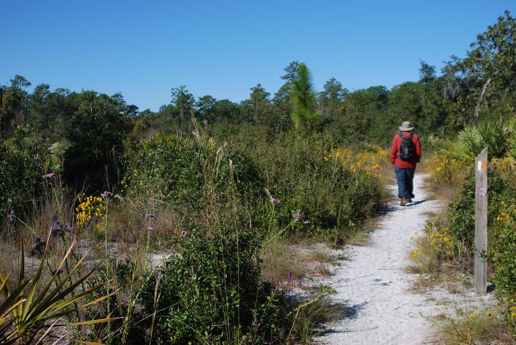 Wekiwa Springs Hiking Trail Florida Hikes: Geneva State Park Map At Infoasik.co