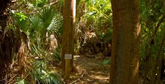 Coastal Hammock Trail