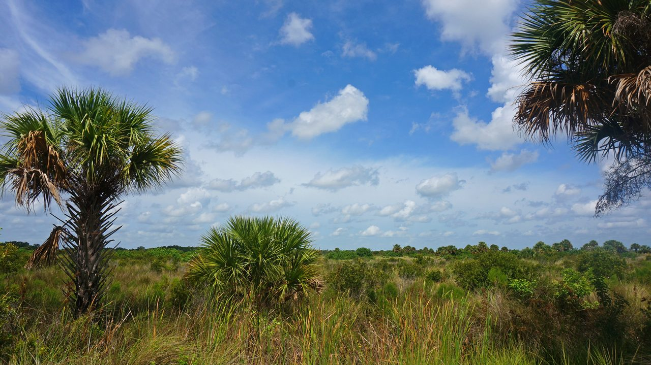 Canaveral Marshes Conservation Area