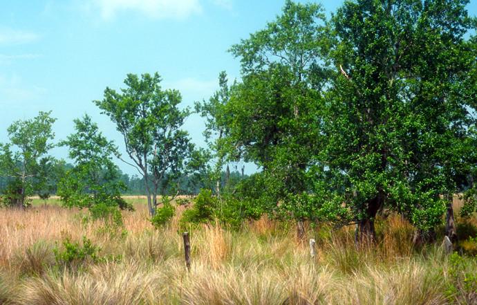 Along the Florida Trail at Bull Creek