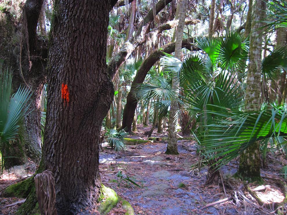 Florida Trail, Prairie Lakes