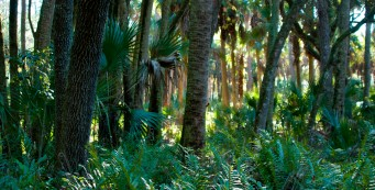 Florida Trail, Tosohatchee