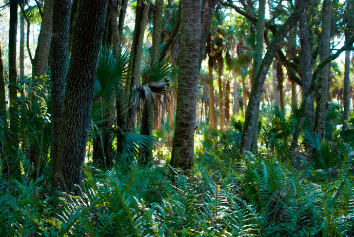 Florida Trail, Tosohatchee