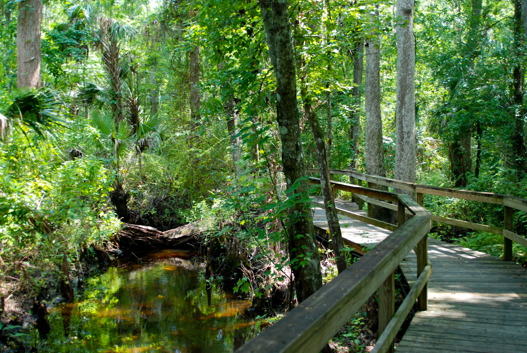 Nature Trails In Florida Florida Hikes