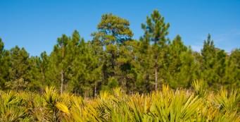 Wiregrass Prairie Yellow Loop