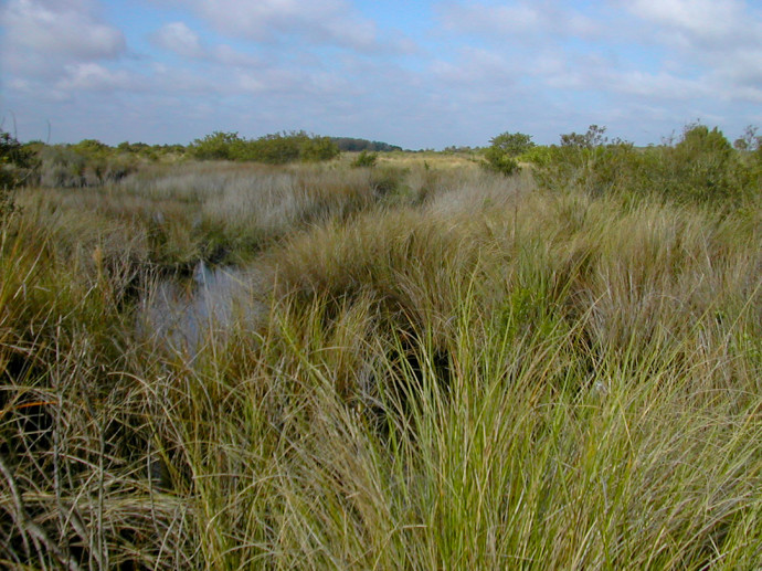 Canaveral Marshes
