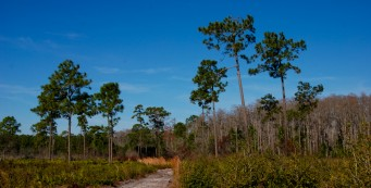 Isle of Pine Preserve Blue Trail