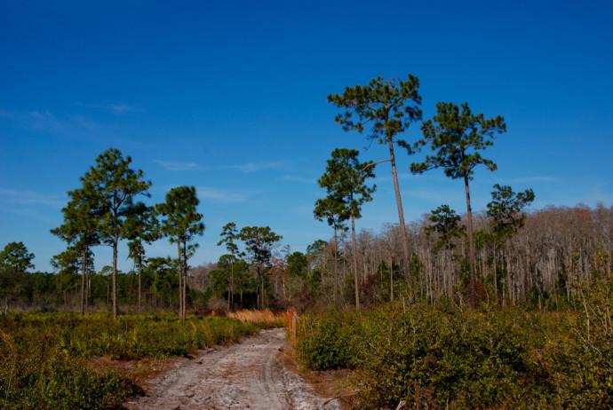 Isle of Pine Preserve Blue Trail